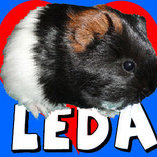 LeDa-yes